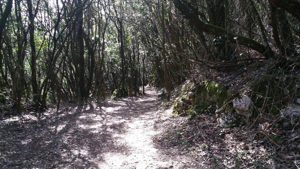 Monte Buciero. Santoña.