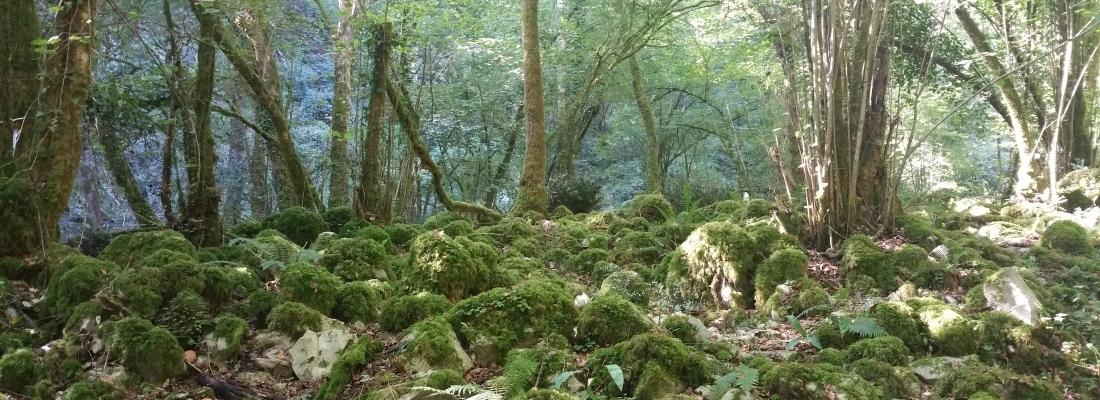 El bosque de Corvera de Toranzo.